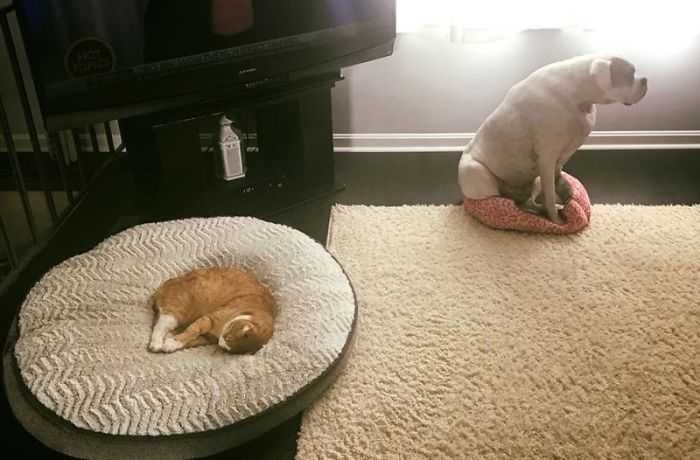 cachorros e gatos