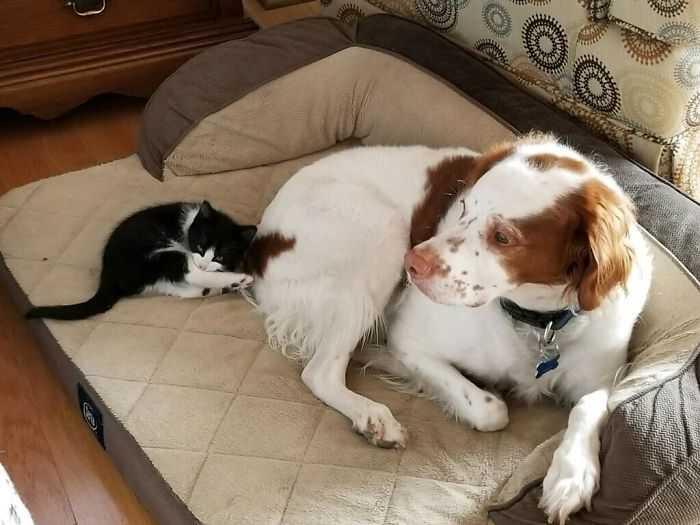camas de gato