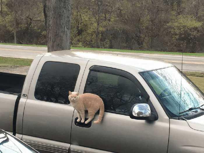 curiosidades gatinhos