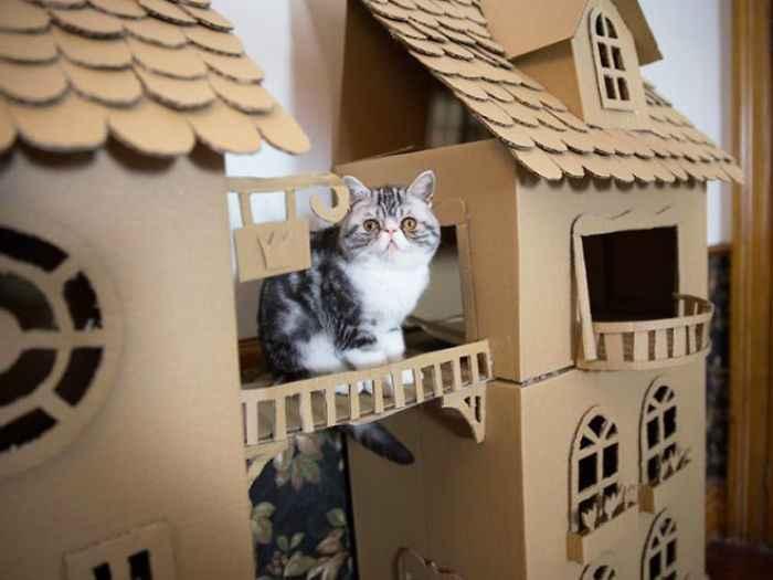 distrações para gatinhos
