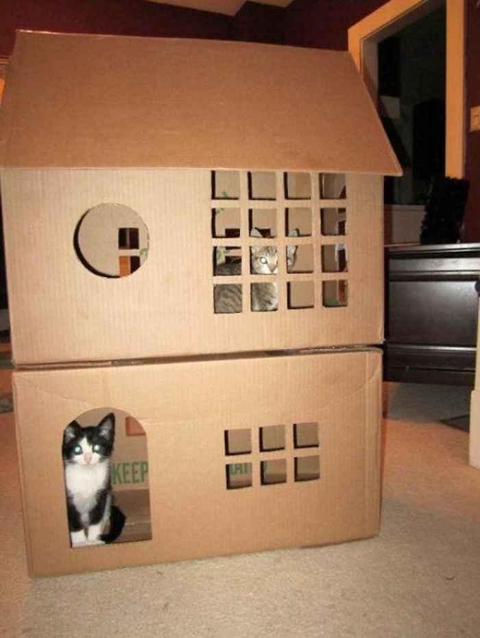 distrações para gatos