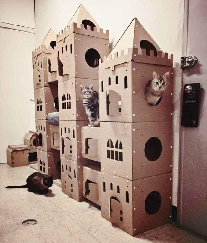 fazer brinquedos para gatos