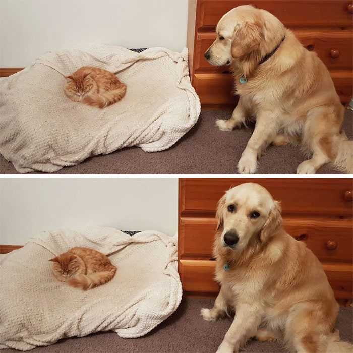 fotos cachorros e gatos
