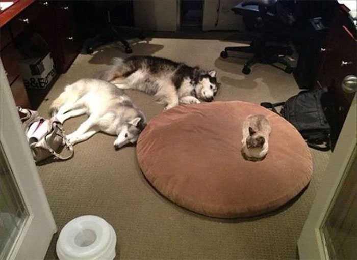 fotos gatos e cachorros
