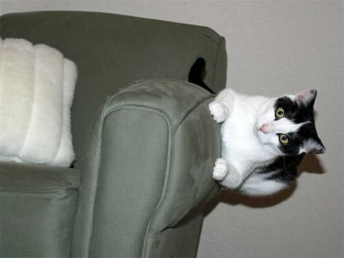 fotos gatos que desafiam as leis da física