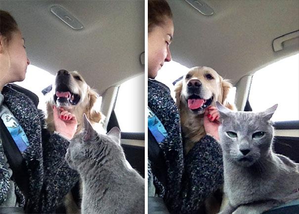 Os gatos mais engraçados imagens