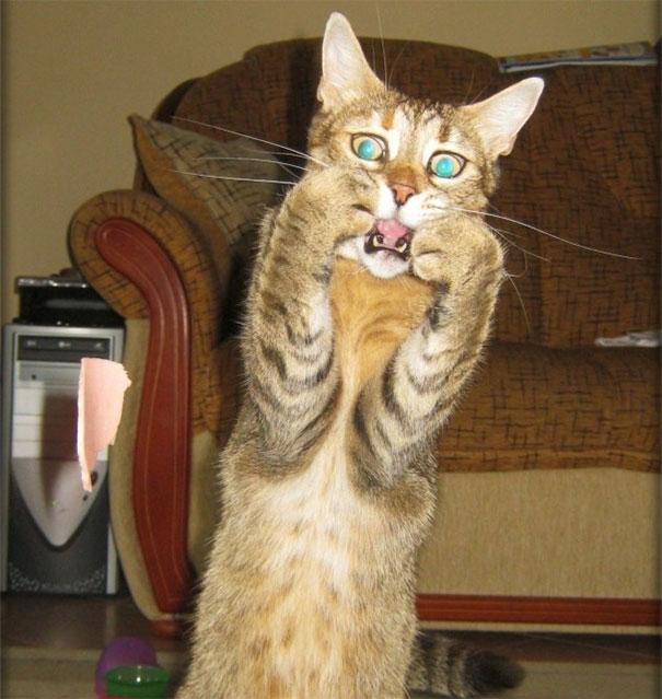 gato mais hilário