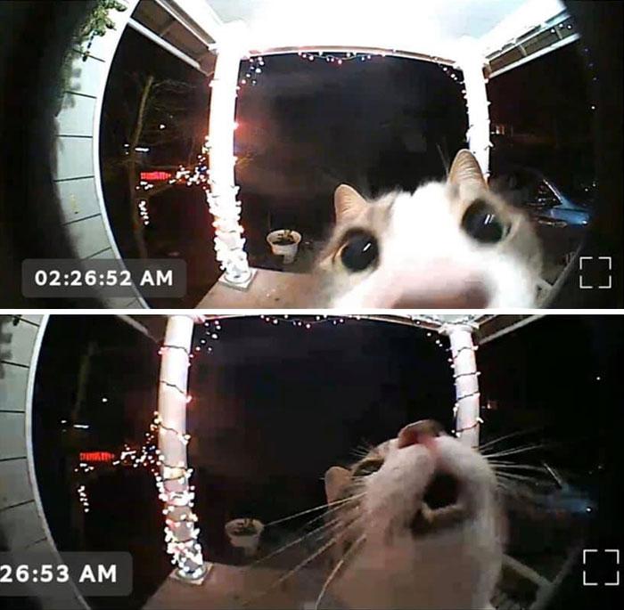 gato pede para entrar câmera