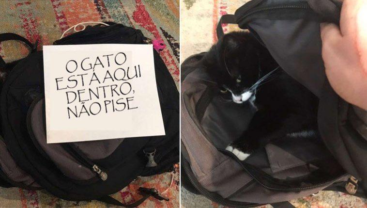 gata ama dormir em mochilas