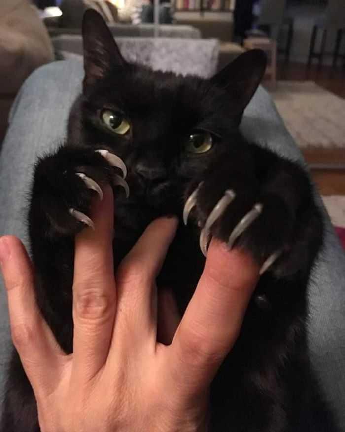 gatinho fofo lindo