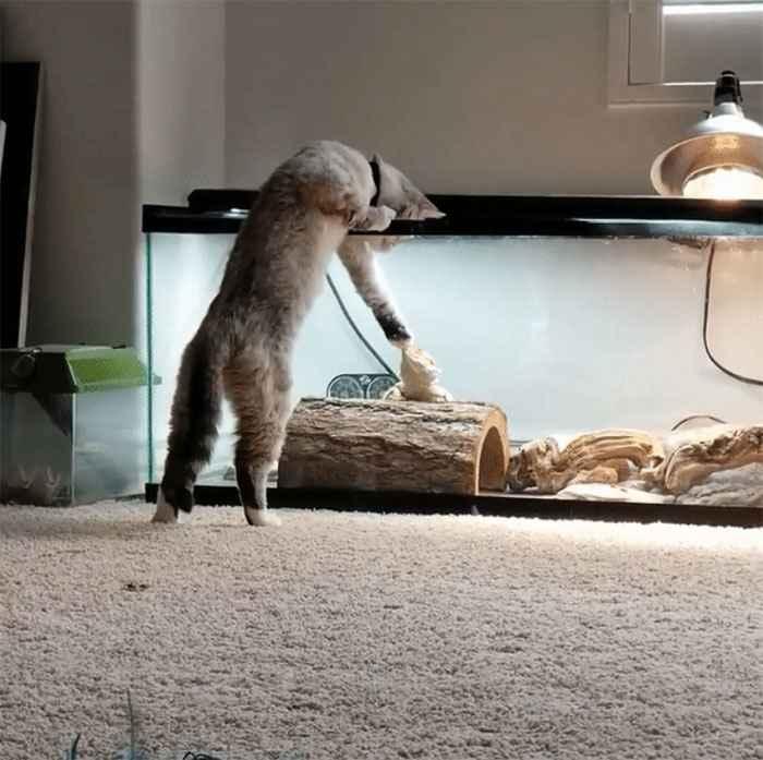 gatinhos brincando com outros animais