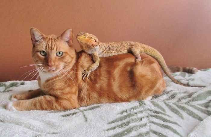 gatinhos e outros animais