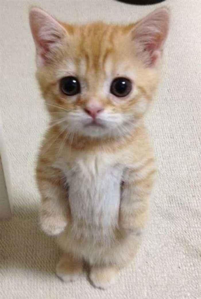 gatinhos em pé
