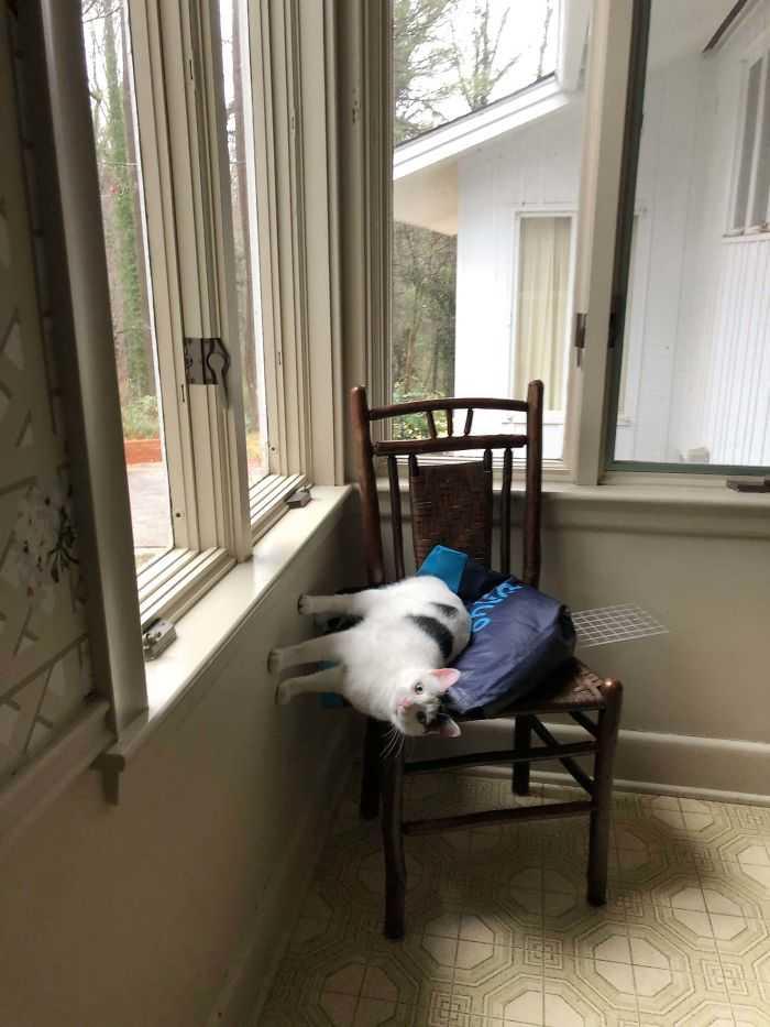 gatos que desafiam as leis da física curiosidades