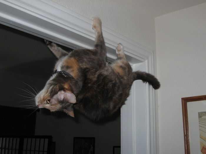 gatos que desafiam as leis da física engraçado
