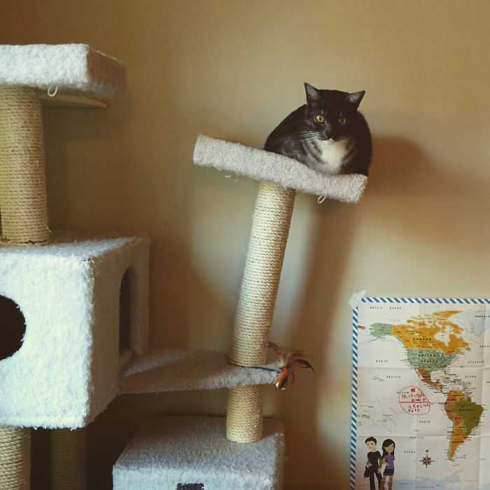 gatos que desafiam as leis da física fotos
