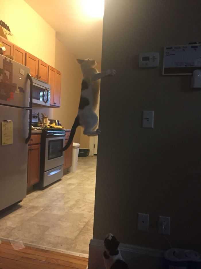 gatos que desafiam as leis da física hilário