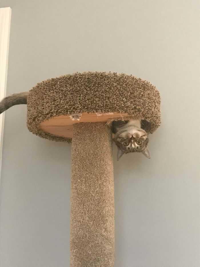 gatos que desafiam as leis da física incrível