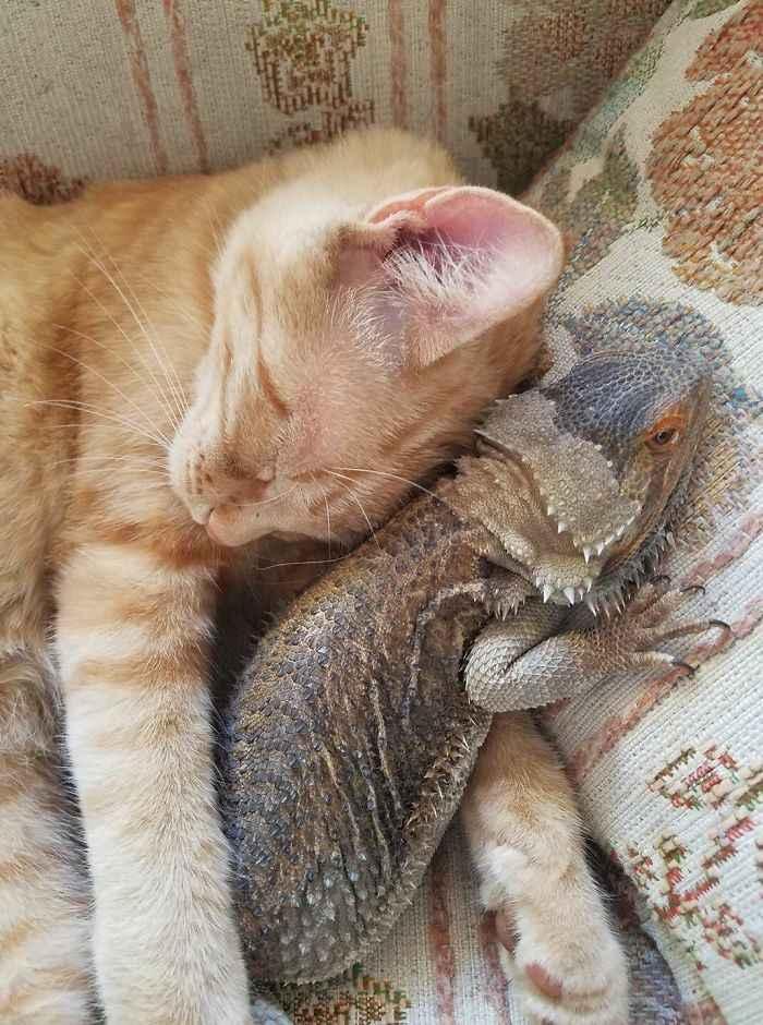 lagartos e gatos