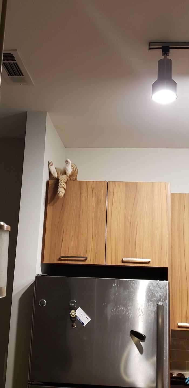 os gatos mais engraçados da internet