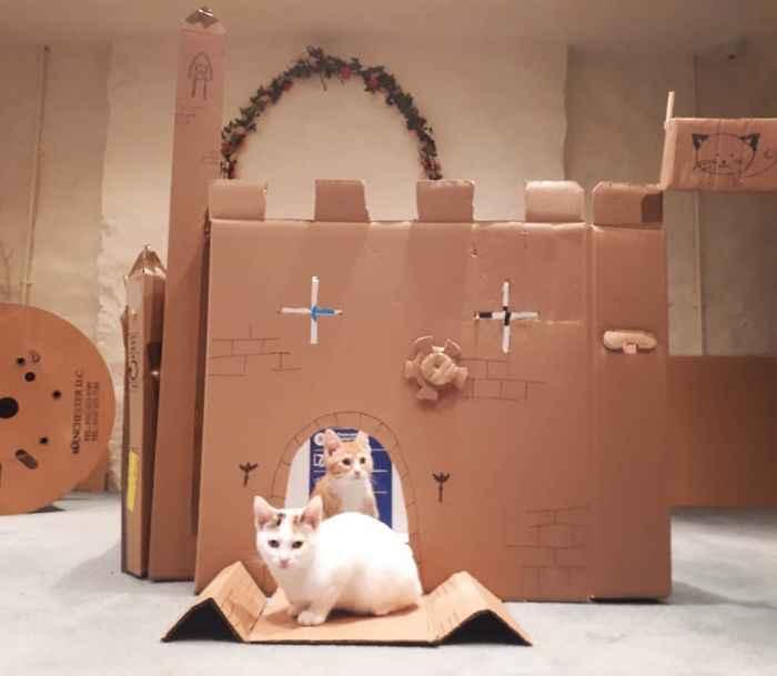 papelão gatinhos