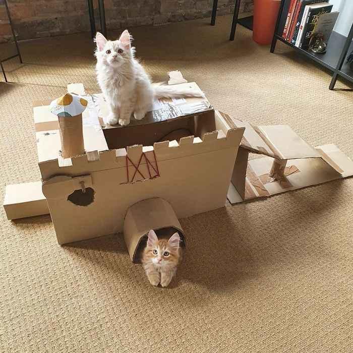 papelão gatos