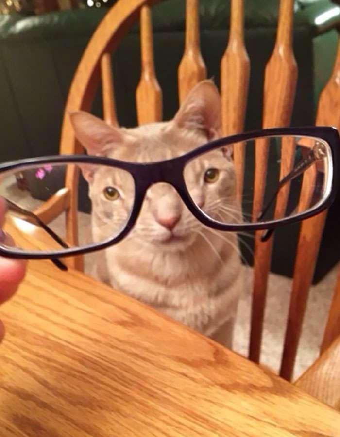 fotos de gatinhos através do vidro