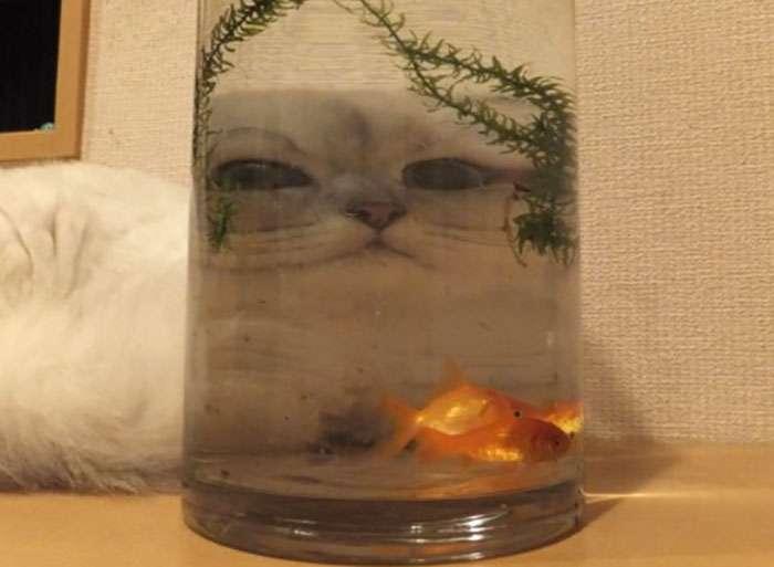 gatinhos através do vidro fotos engraçadas