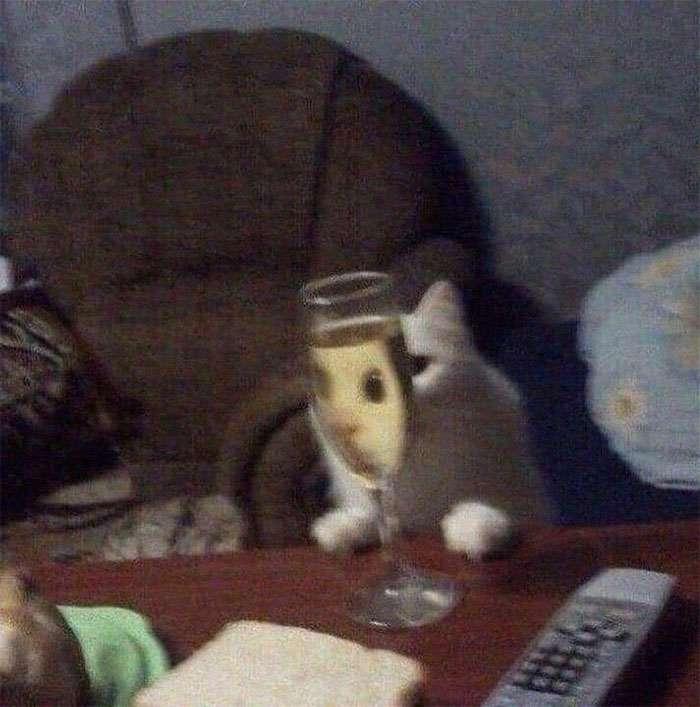gatinhos através do vidro imagens