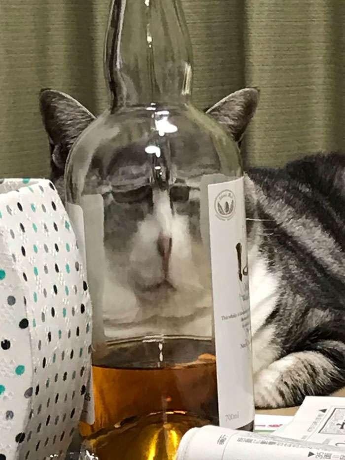 imagens de gatinhos através do vidro