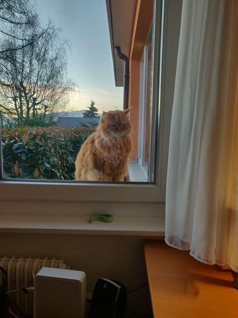 gato janela bom dia