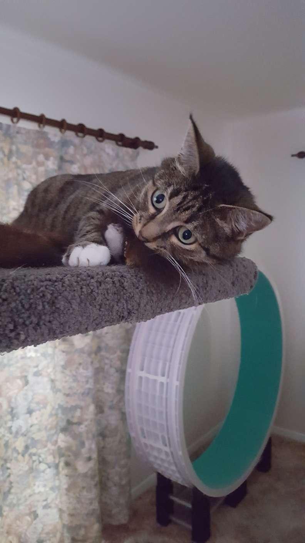 gatinha de rua resgatada engraçada