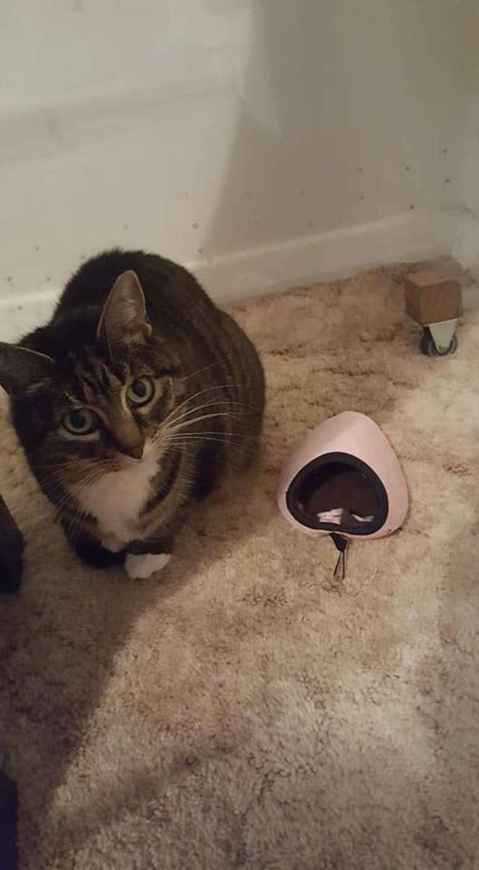 Cama de gato minúscula gatinha