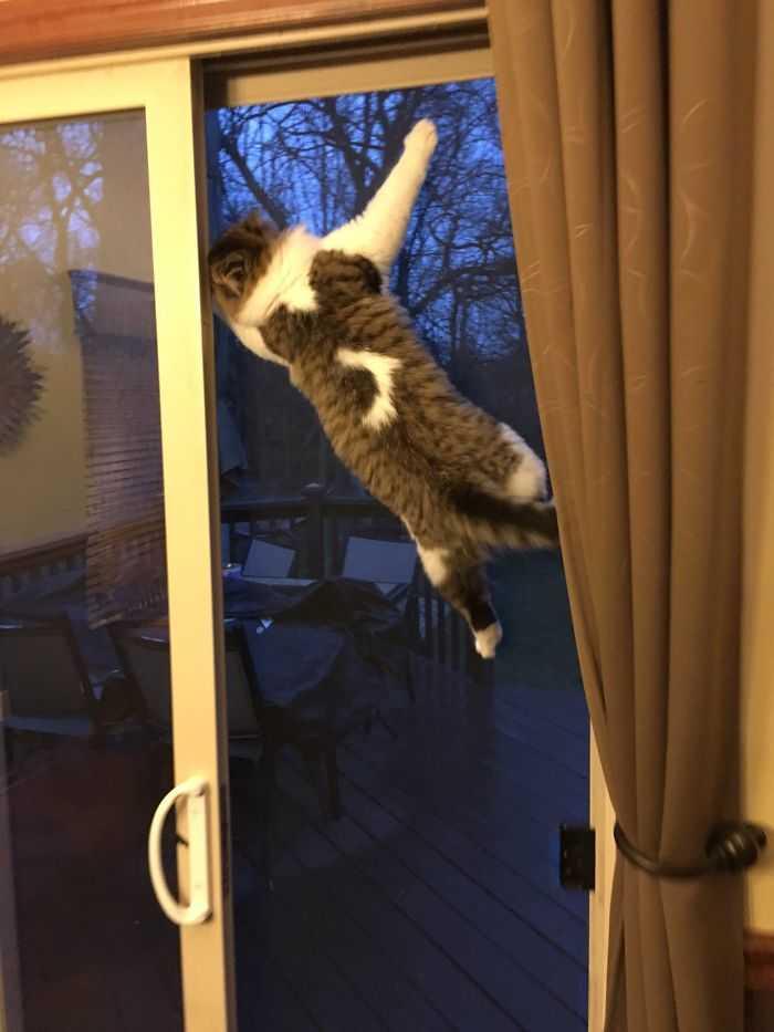 todos de gatinhos divertidas