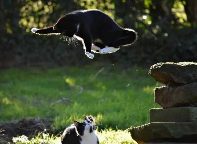 Concurso premia fotos hilárias de gatinhos