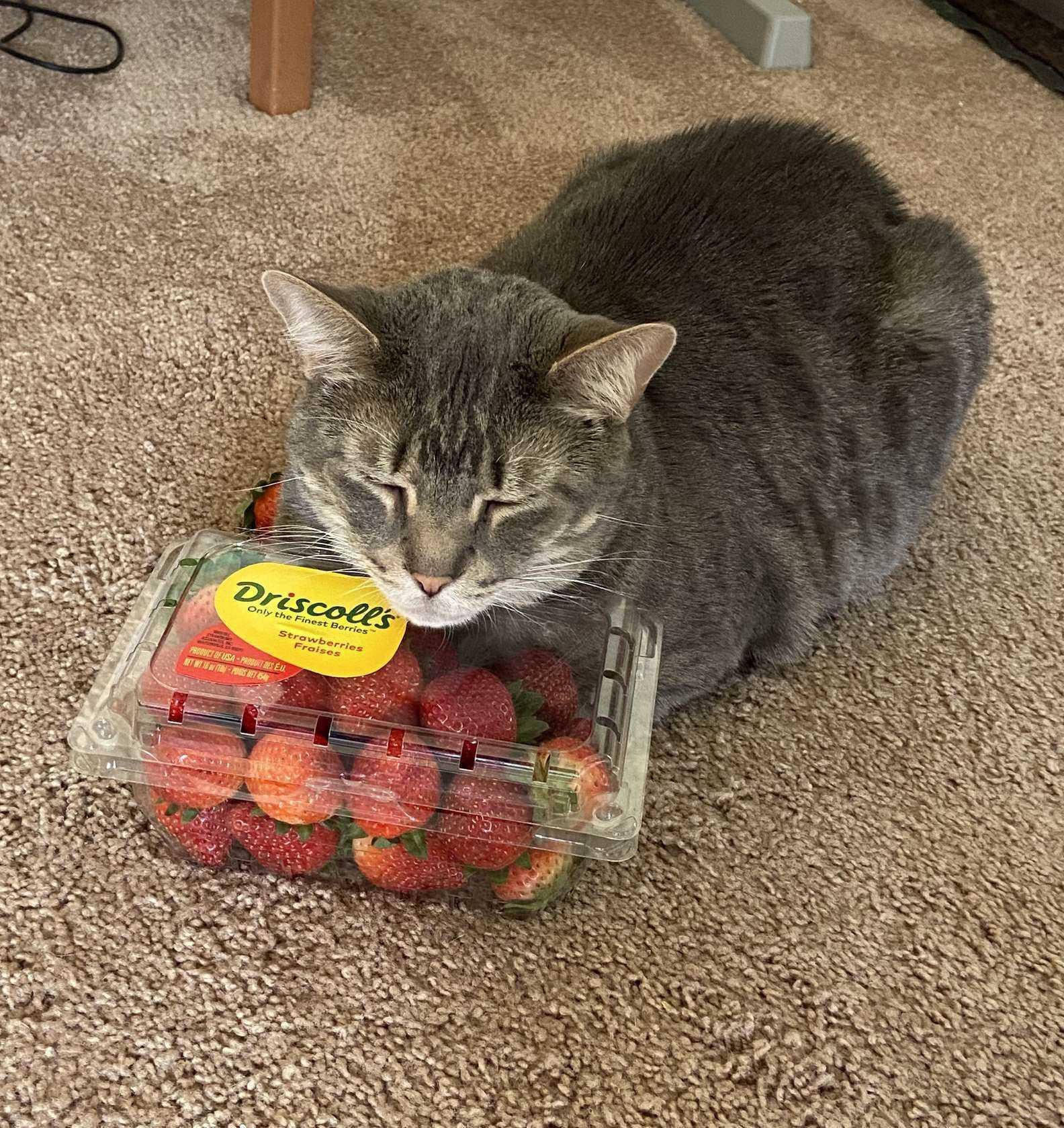 gatos e morangos