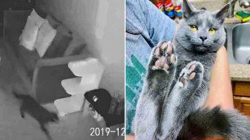 Câmera mostra reação de gatinho