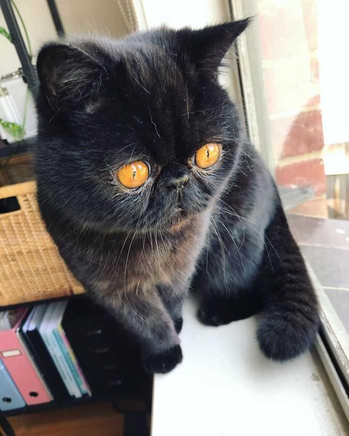 Dona desse gatinho fofo