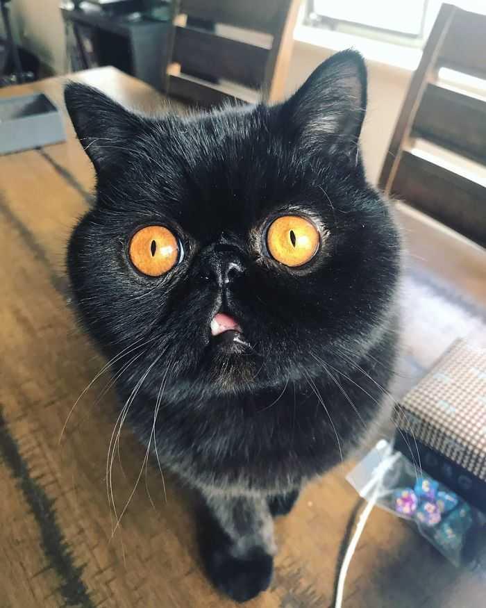 Dona desse gatinho olhos
