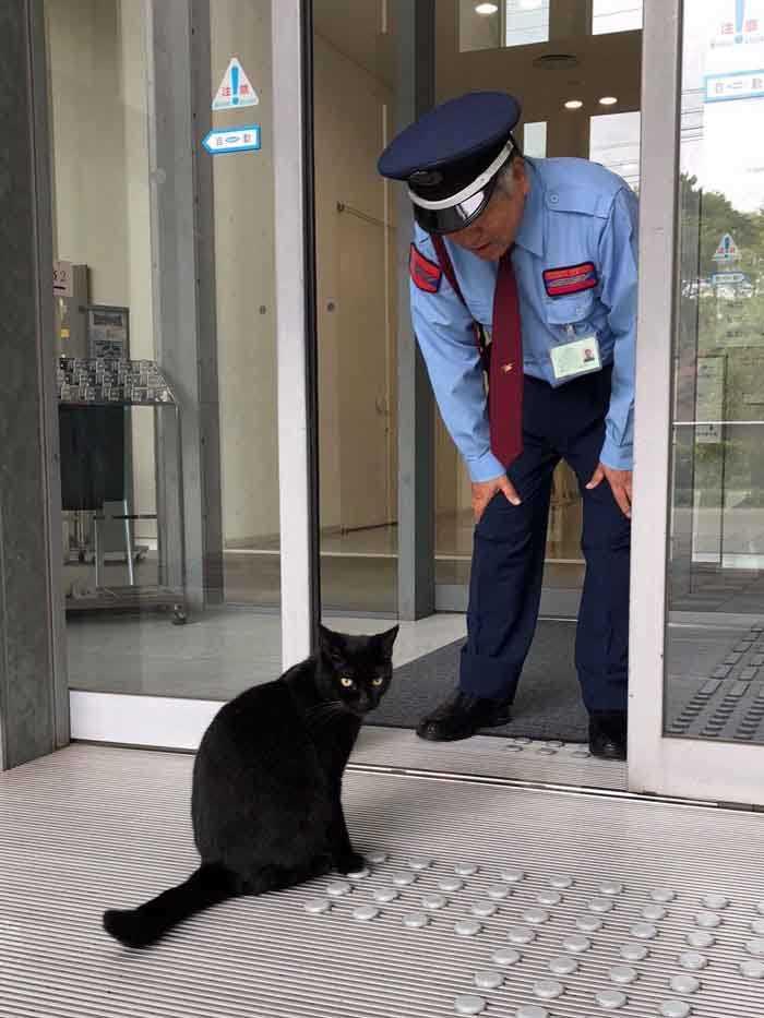 Dupla de gatinhos museu