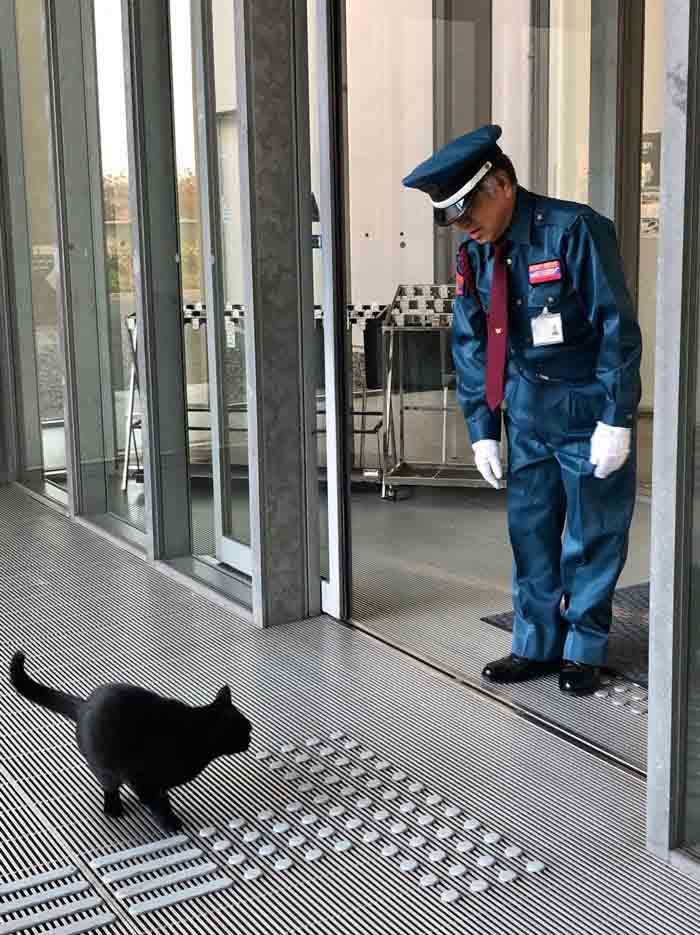 Dupla de gatinhos segurança