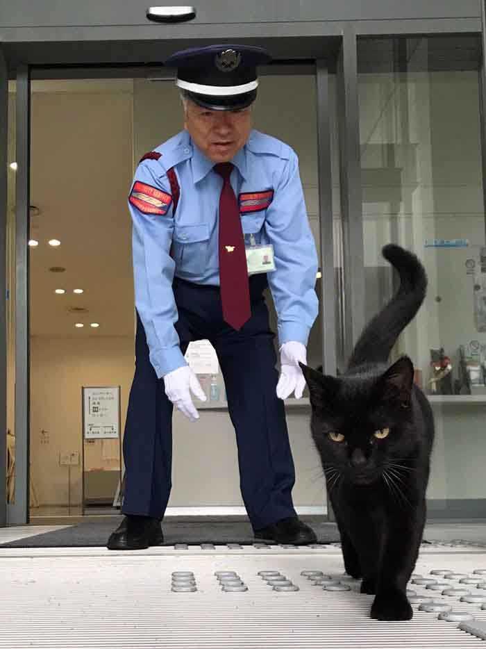 Dupla de gatinhos tenta invadir museu foto