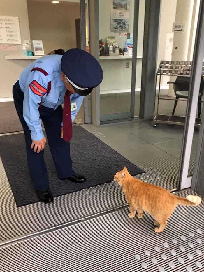 Dupla de gatinhos tenta invadir museu