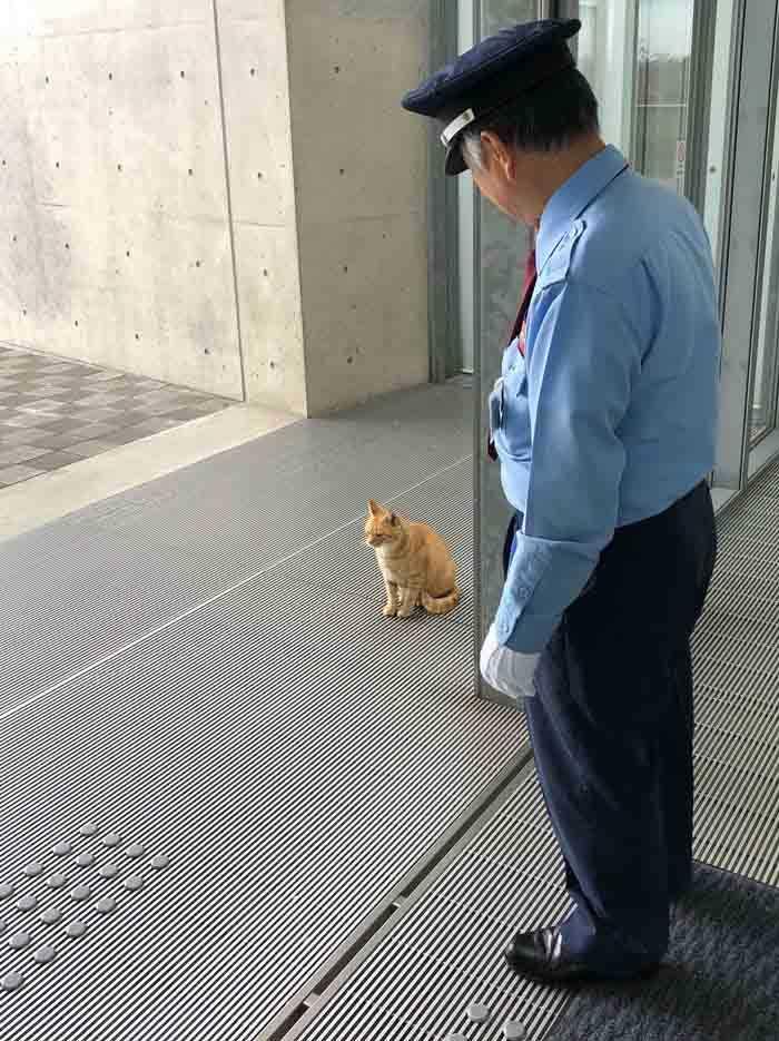 Dupla de gatinhos tenta invadir