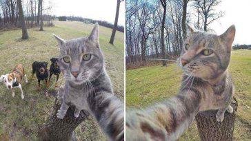 Esse gatinho tira selfies melhores