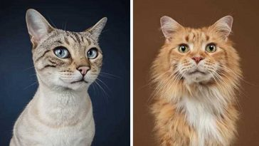 Fotógrafa deixa gatinhos invadirem