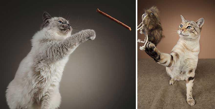 Fotógrafa deixa gatinhos invadirem estúdio