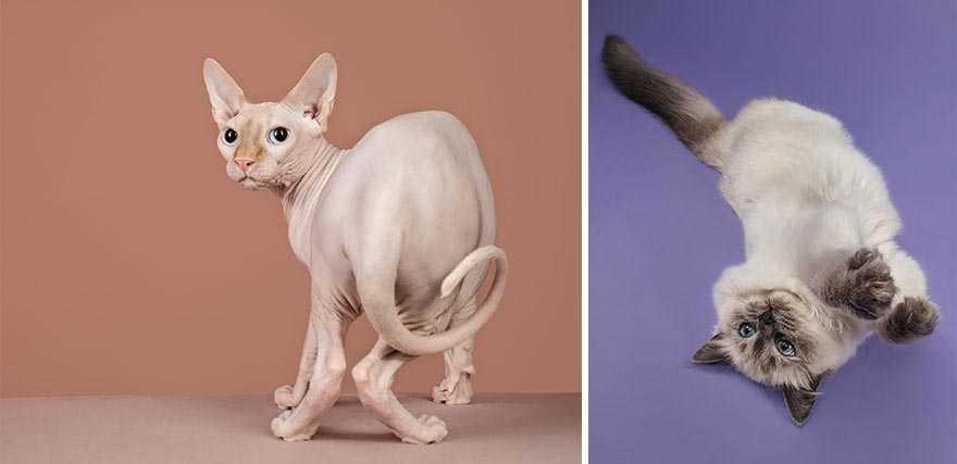 Fotógrafa deixa gatinhos invadirem seu estúdio e resultado
