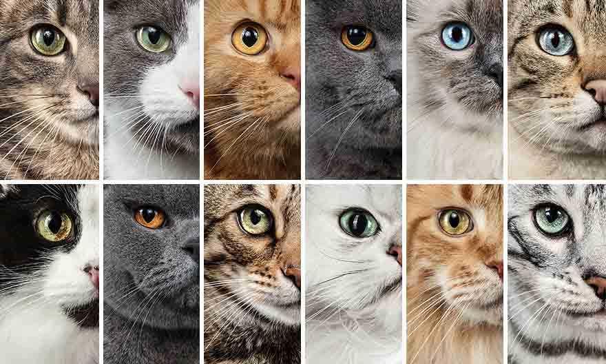 Fotógrafa deixa gatinhos invadirem seu estúdio