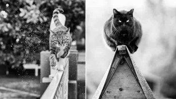 Fotógrafa registra gatinhos equilibristas